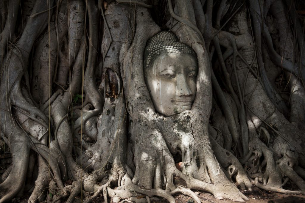 ayutthaya ruins buddha head buried in roots