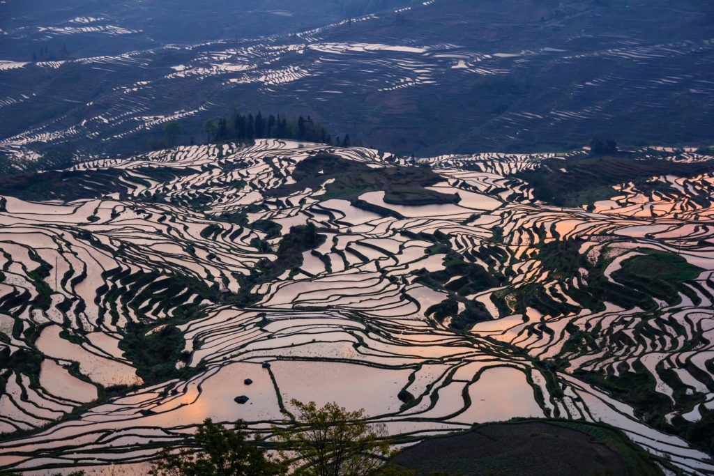 rice terraces in yuanyang china