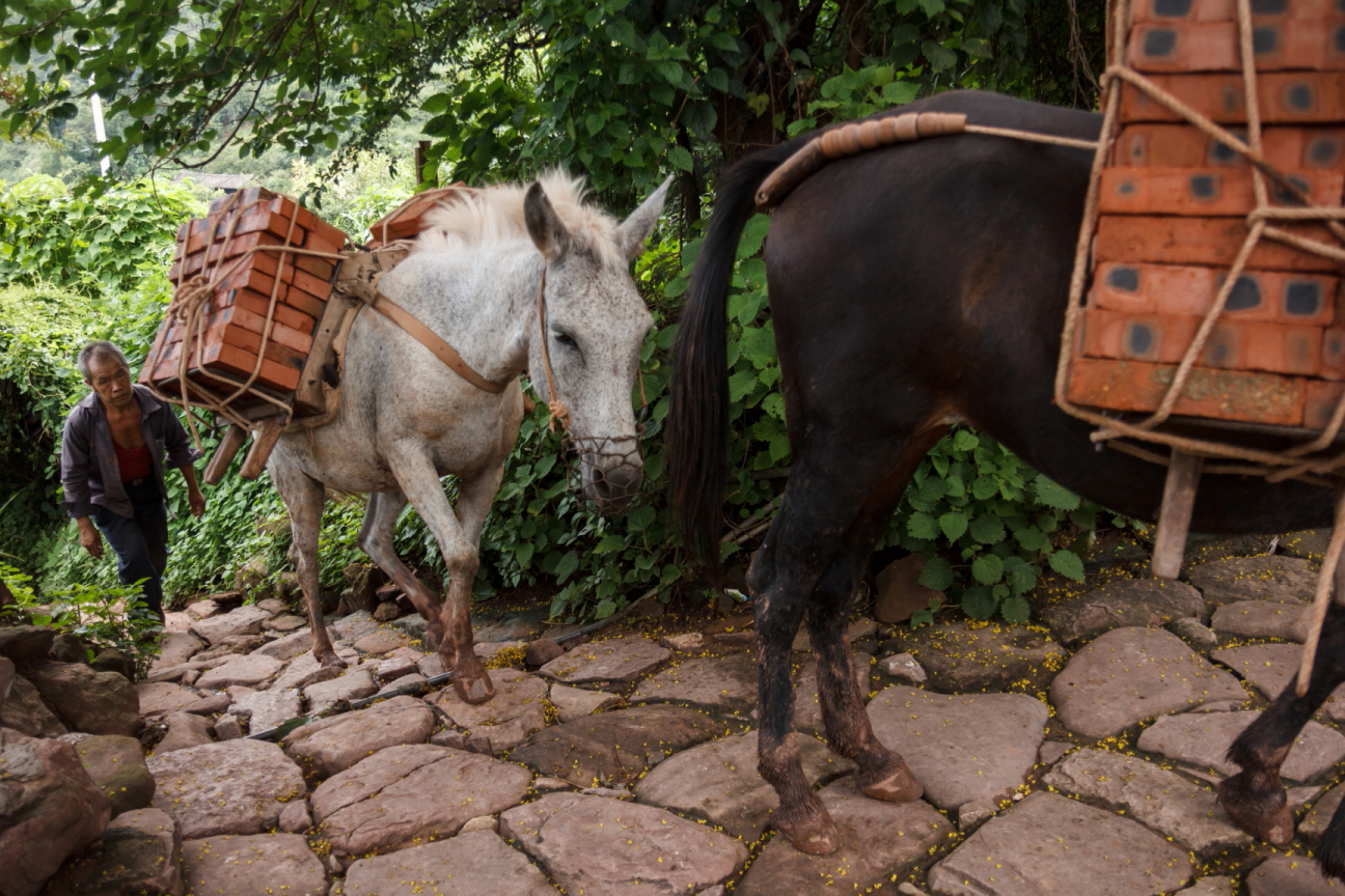 villager and horses in china