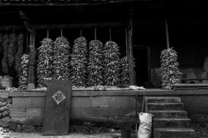 chinese countryside, drying corn