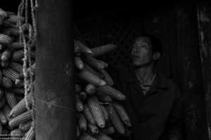 chinese countryside villager, corn