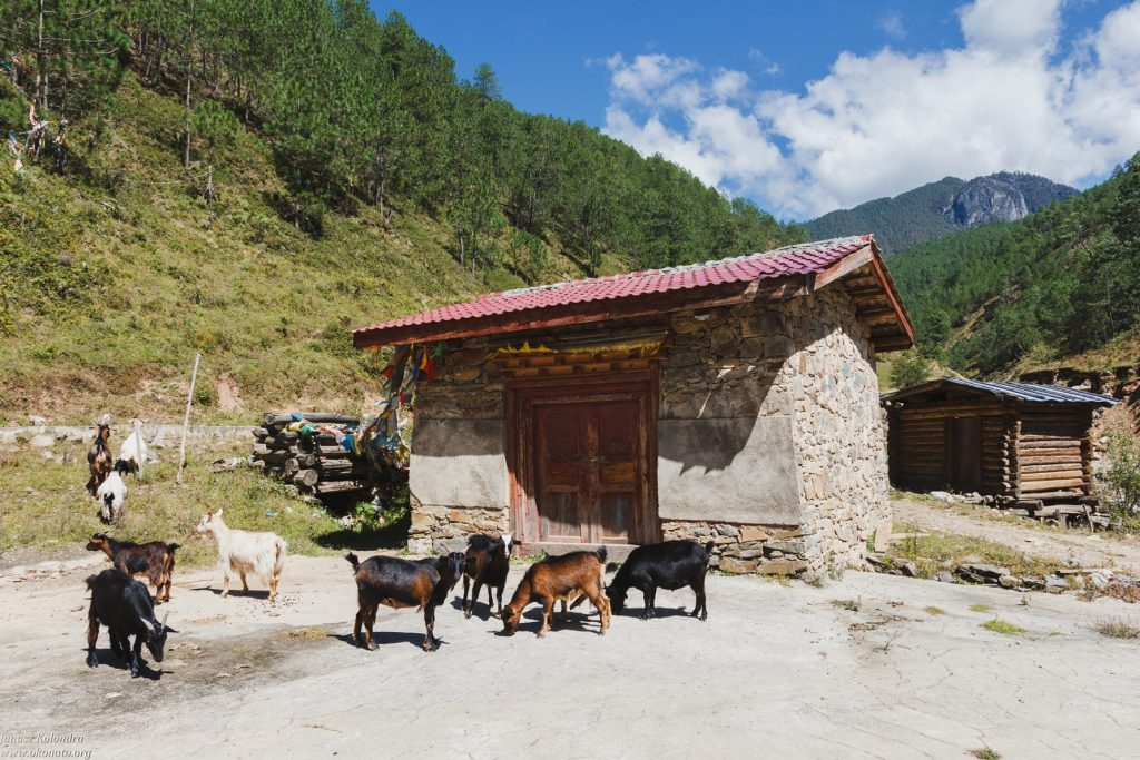 goats and hut in the mountains